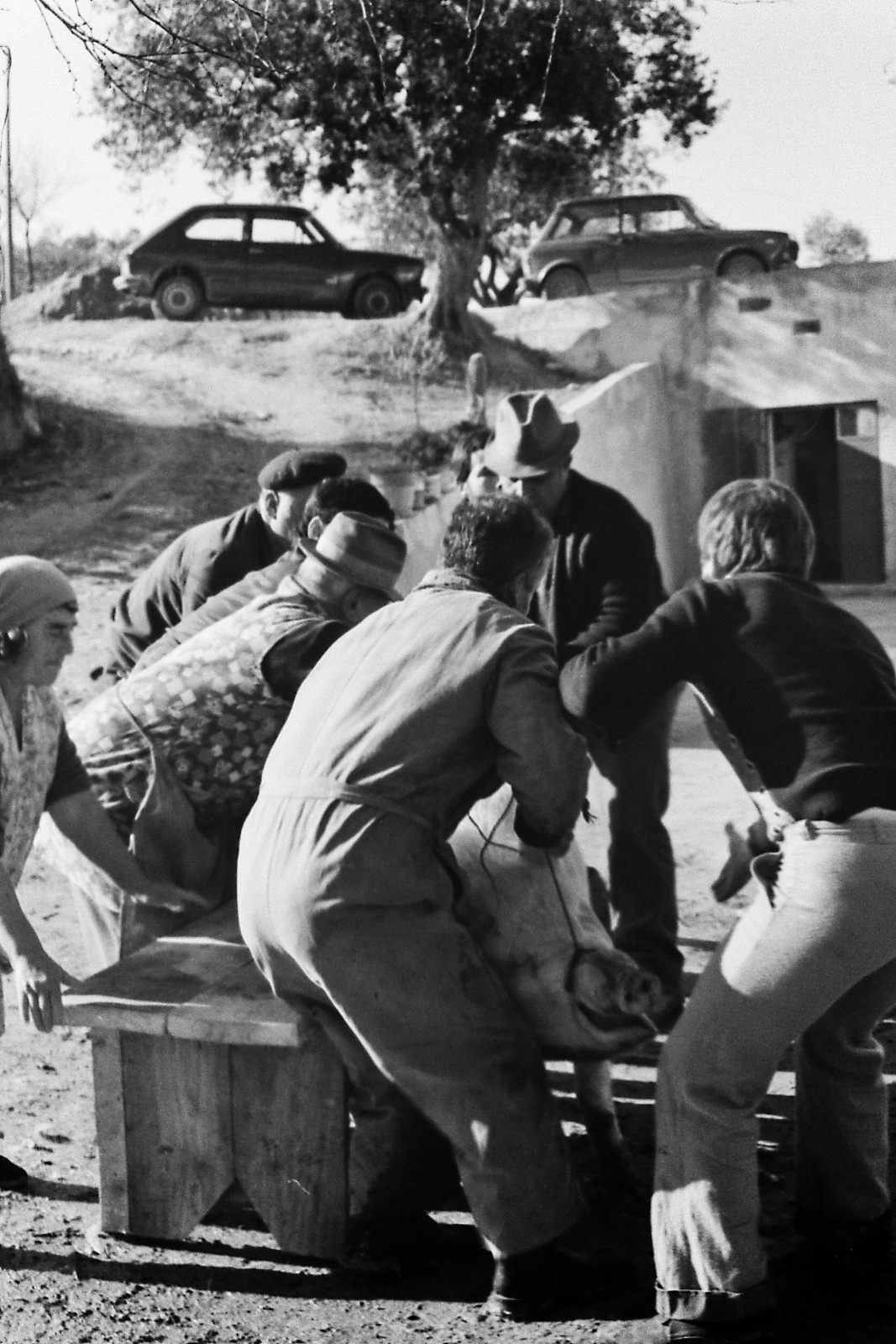 Suinicidio (1979)